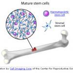 Bone Cell