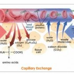 Capillary Pictures