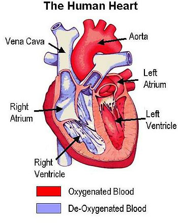 Medical Pictures Info ndash Cardiovascular Disease
