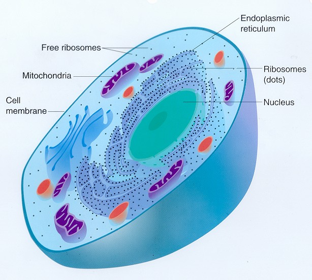 Medical pictures info eukaryotic