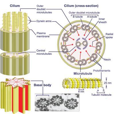 diagram of price elasticity of demand medical pictures info – cilium #7