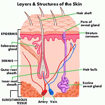Skin Layers Defenderautofo