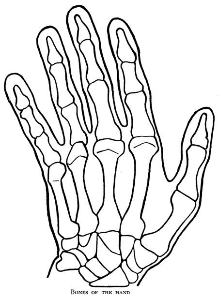 Drawing  Wikipedia