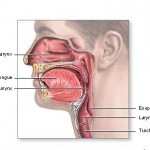 Throat Cancer