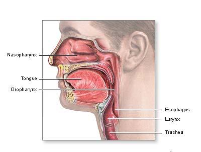 how to know you have cancer in the throat