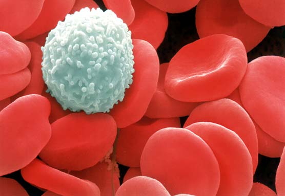 Medical Pictures Info White Blood Cells