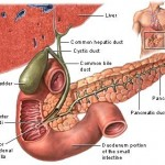 Common Bile Duct