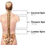 Cervical Vertebrae
