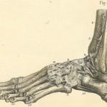 Cuboid Bone